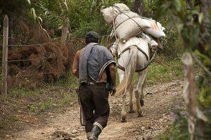 Trabajo informal: Principal fuente de recursos económicos de los habitantes de Dagua.
