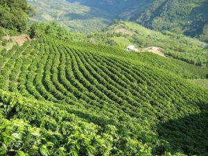 Paisajes rurales que prefieren los bogotano
