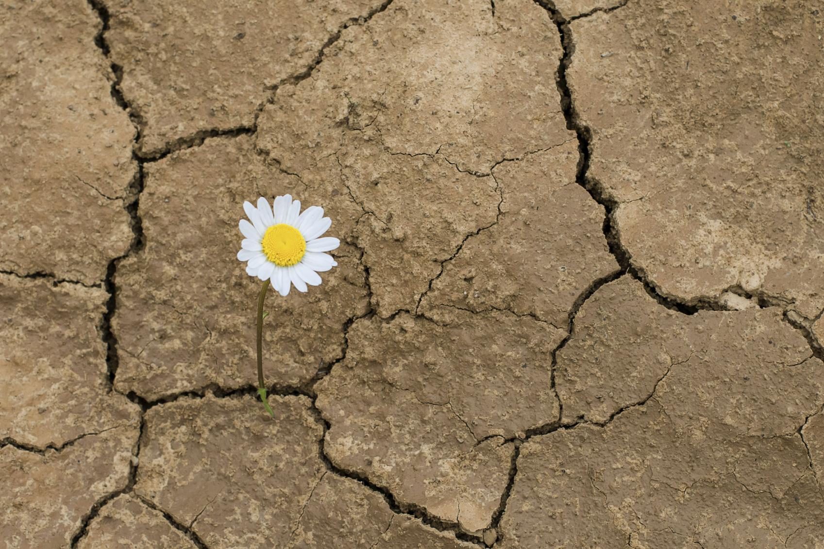 Desastres naturales afectan la agricultura con mayor impacto