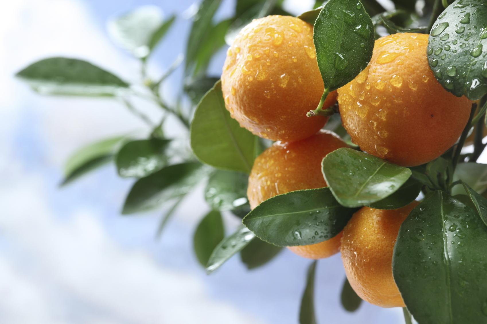 Naranjas, un alimento rico en vitaminas