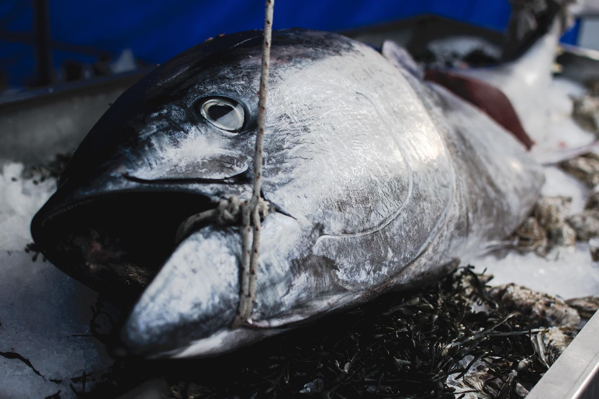 Consumir pescado en mal estado, podría causarle problemas de salud