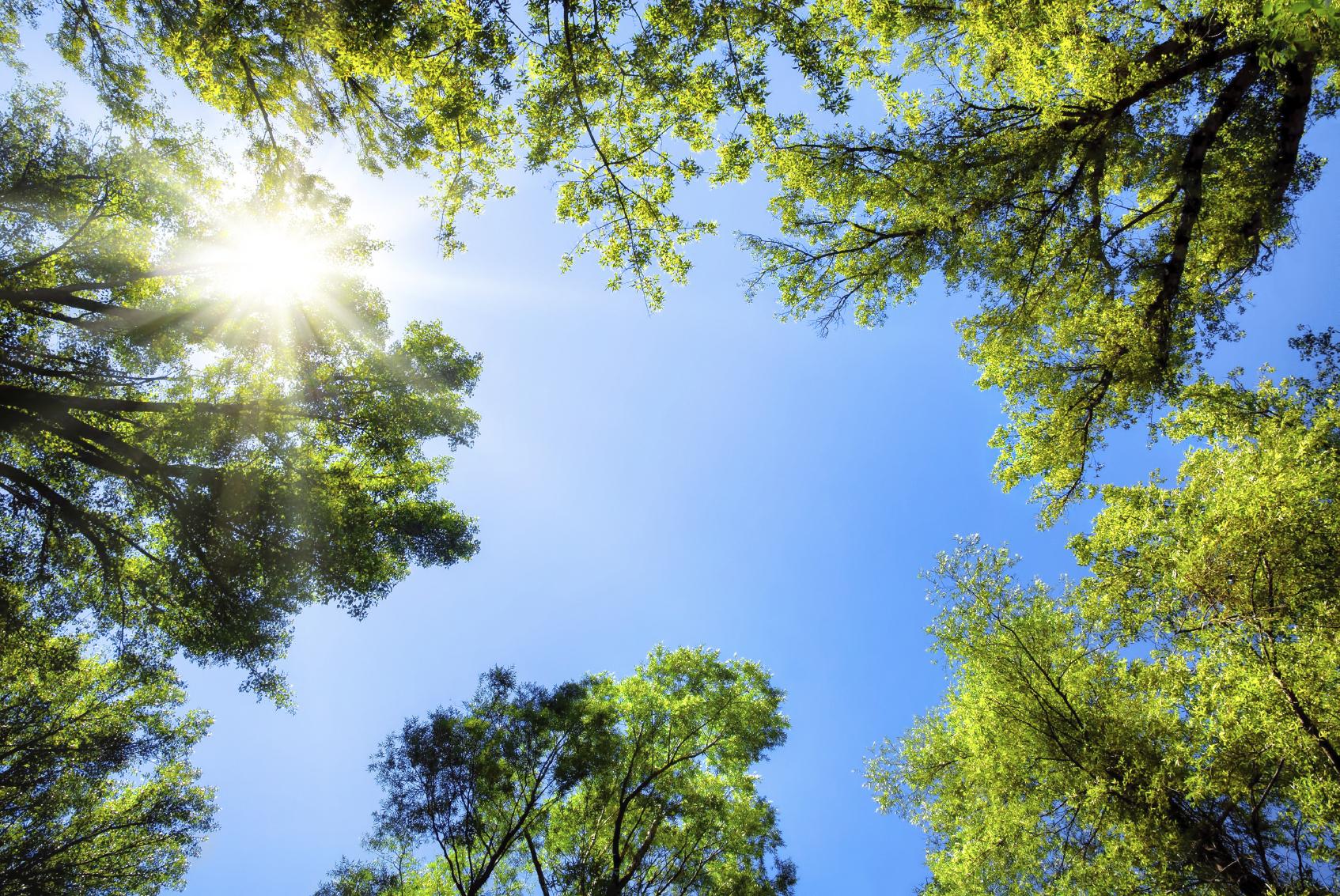 En zonas cafeteras sembrarán cinco millones árboles