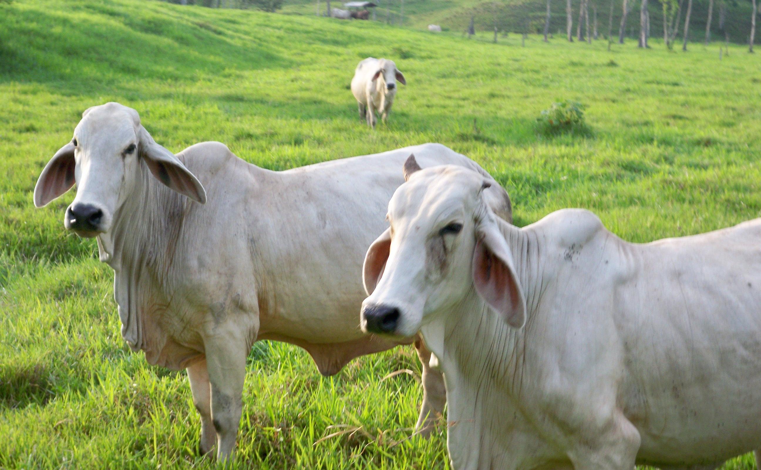Iniverten $2 mil 800 millones en proyectos enfocados en adelantar programas en el área animal.