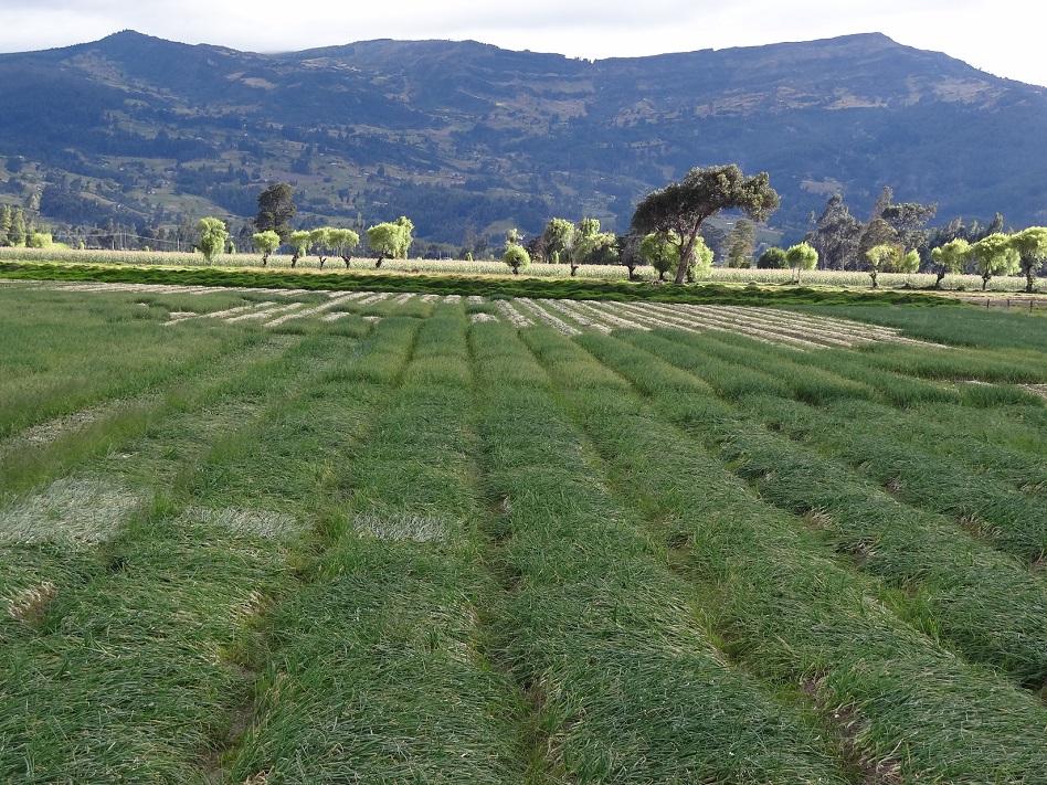 2.400 millones de pesos para el agro en Boyacá