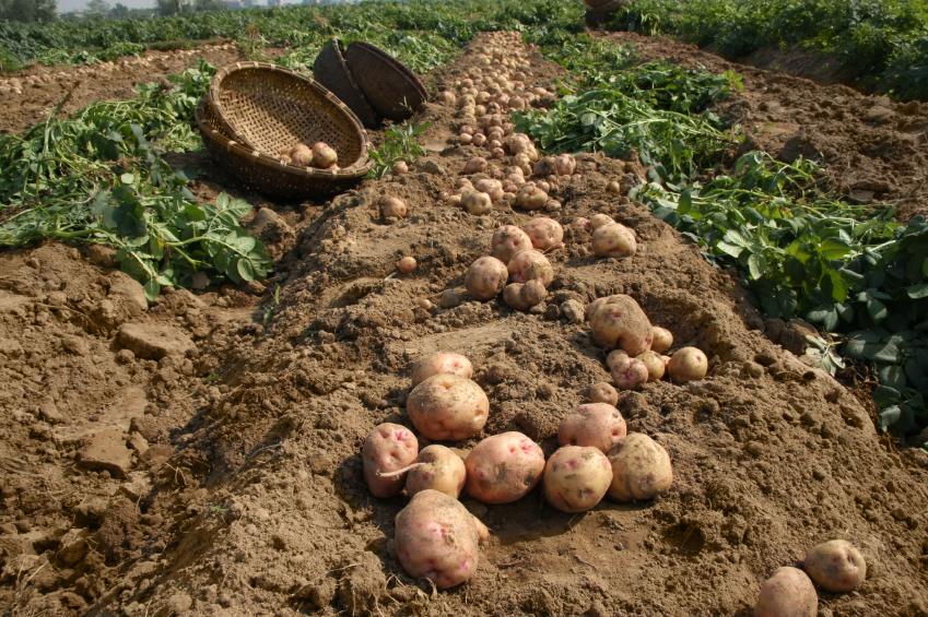 Ministerio de Agricultura lidera comisión sobre seguridad alimentaria