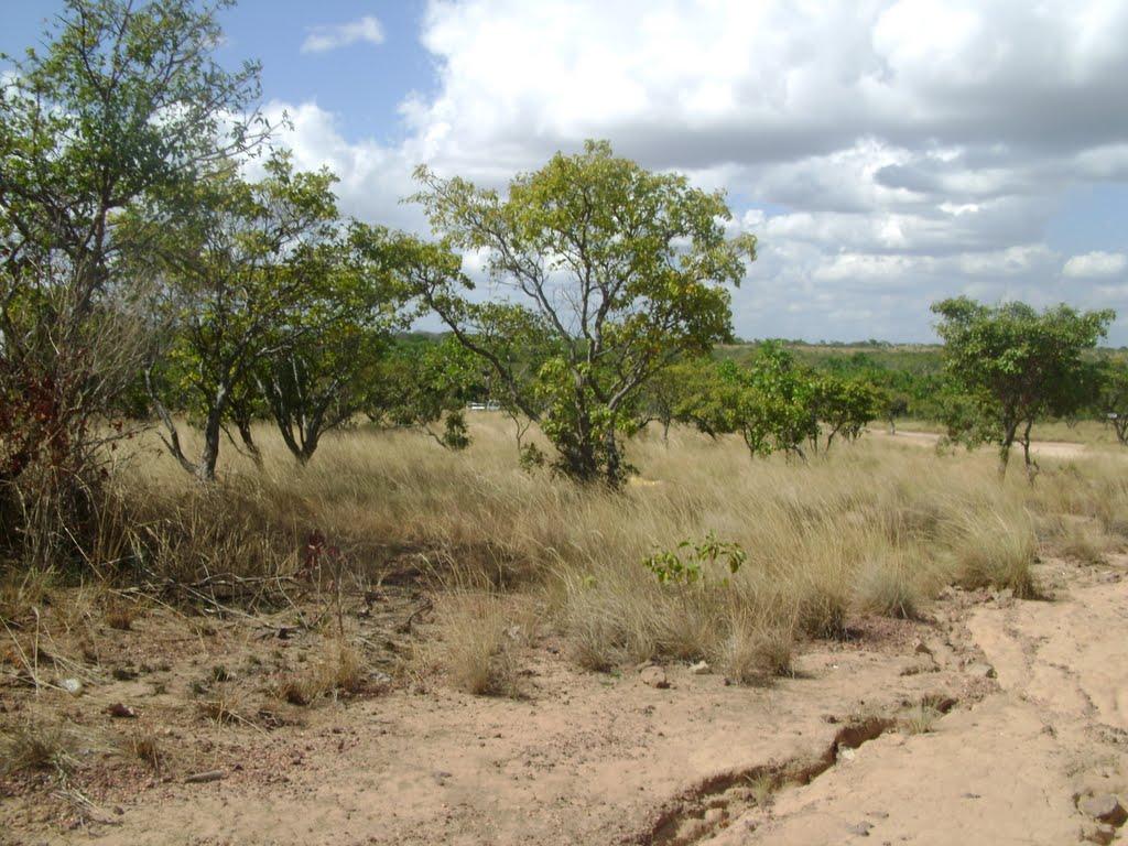 Recomendaciones para época de sequía