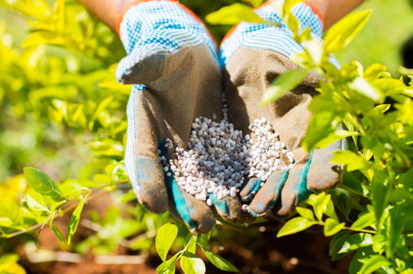 Fertilizantes de Rusia llegarán a finales de mayo