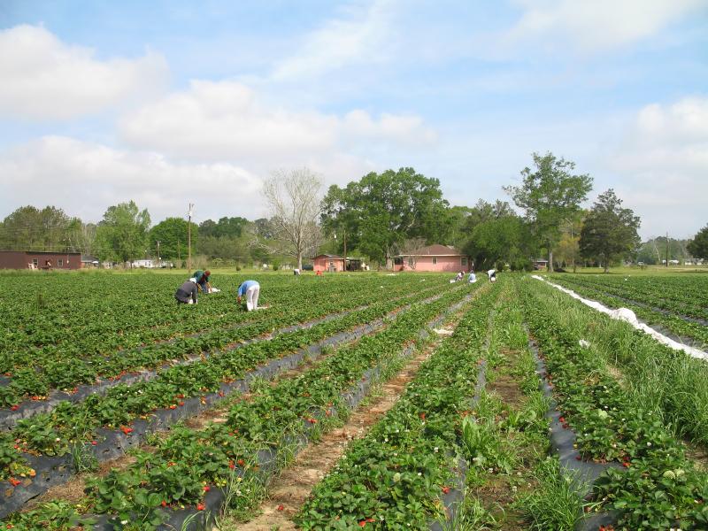 Agro colombiano en la agenda Colombia- Brasil
