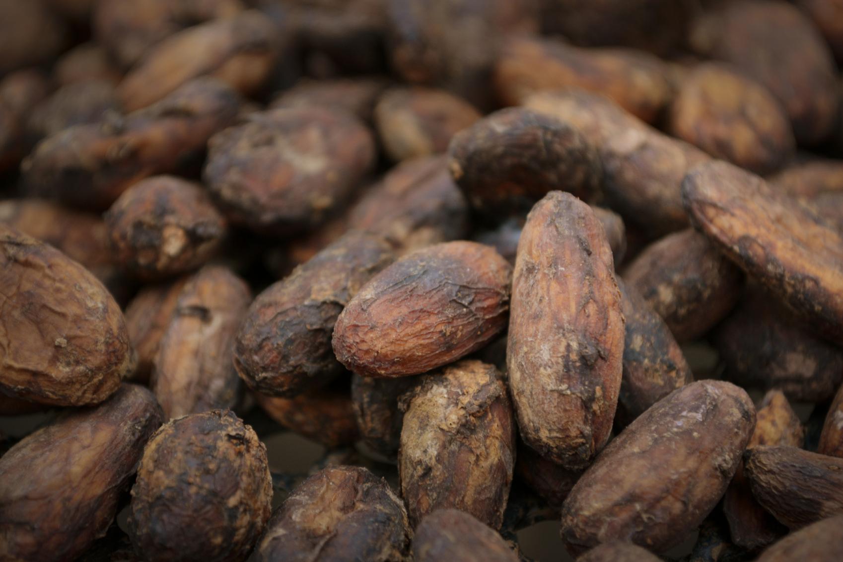 Cacao colombiano participará en Salón internacional de Chocolate