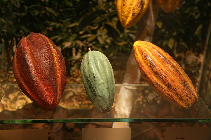 Tres variedades de cacao