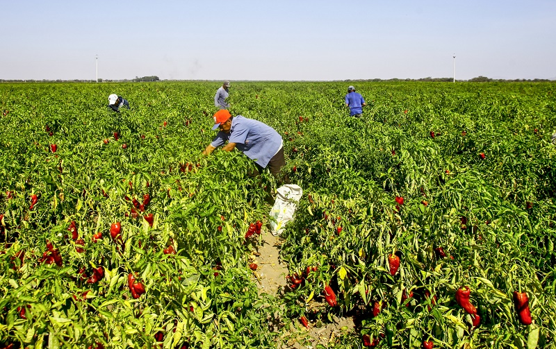 Asociaciones de usuarios aportan al desarrollo rural y seguridad alimentaria