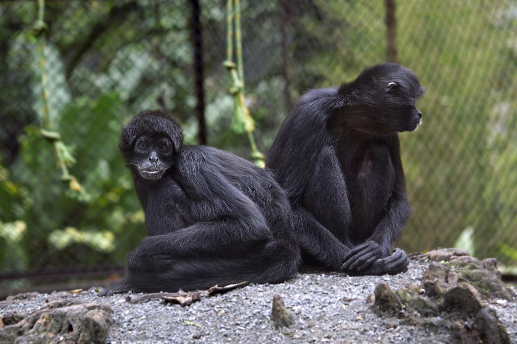 Capacitación sobre tráfico de fauna silvestre en Casanare