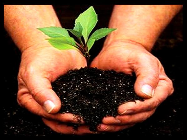 Nuestro Medio ambiente necesita un respiro