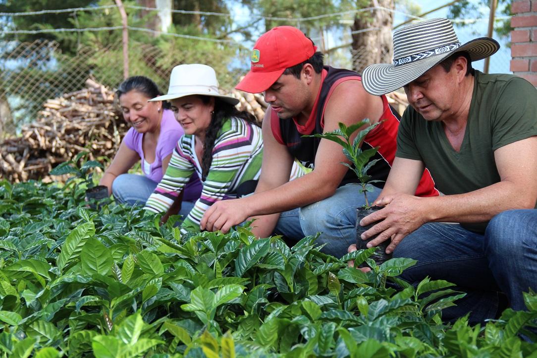 Familias indígenas se benefician con entrega de bovimos de cruce de bovinos Cebú