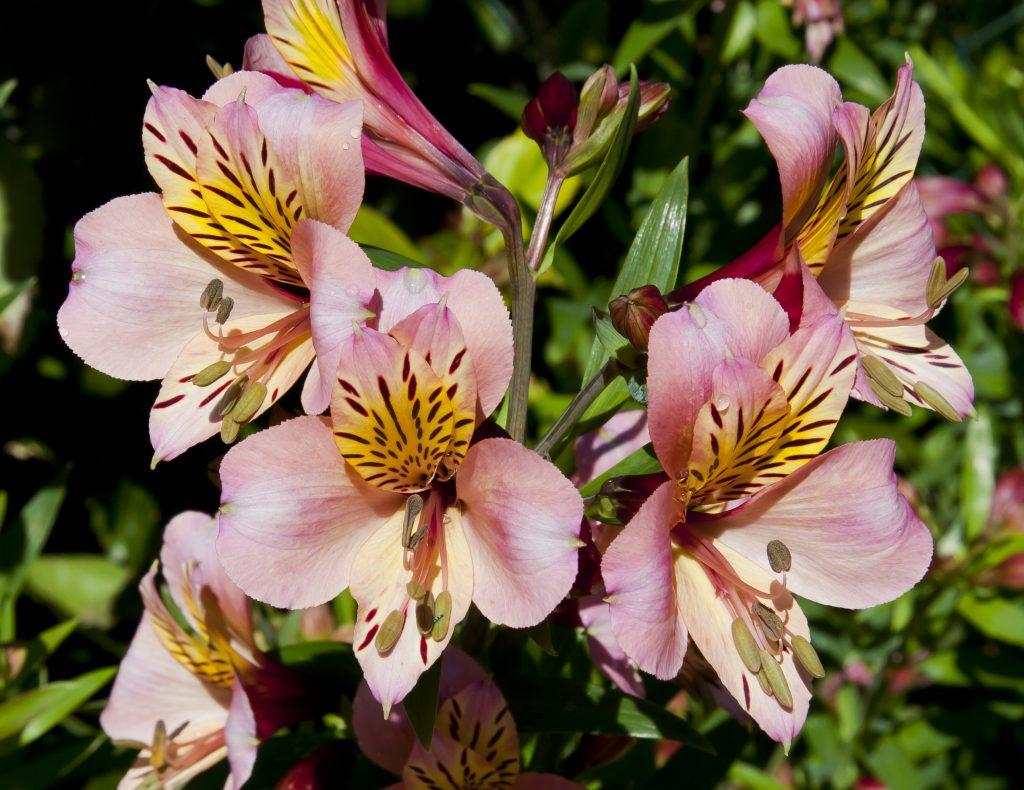 Material para siembra de flores podrá ser exportado a México