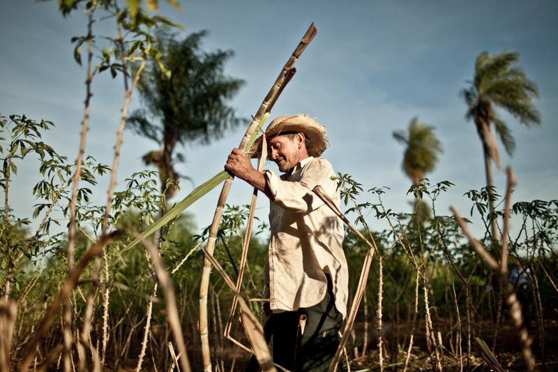 Dolor de espalda el flagelo de los campesinos en Colombia
