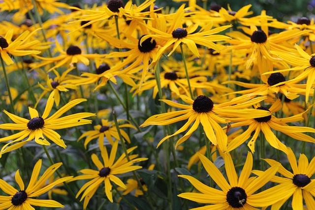 Jardín botánico para rescatar cultura indígena