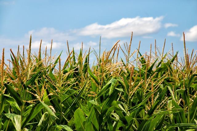 Fenalce y el ICA acuerdan acciones para beneficiar cultivadores