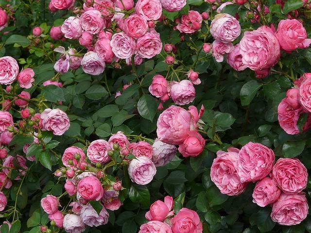 Colombia podrá exportar 366 especies de flor a México Col