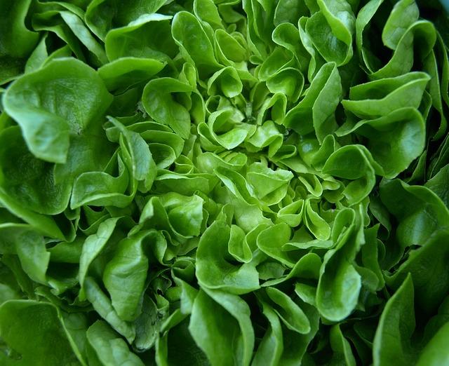 Salaty, la empresa que se acopló a estándares internacionales en alimentos