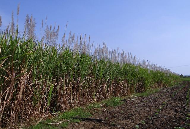 Vinaza, energía para el sector azucarero