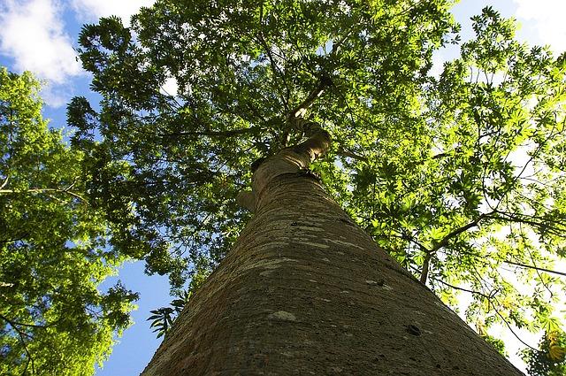 Quebrada San Vicente en Dagua está conservada por 4300 árboles