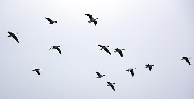 Todo listo para la celebración del día Internacional de las aves migratorias