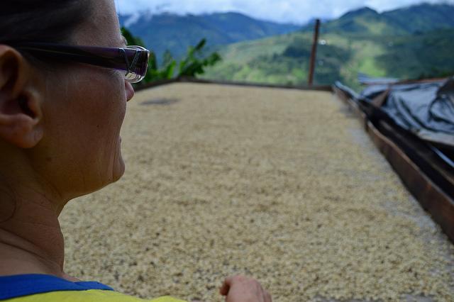Una alemana que cultiva café orgánico en las montañas del Quindío –Primera parte-