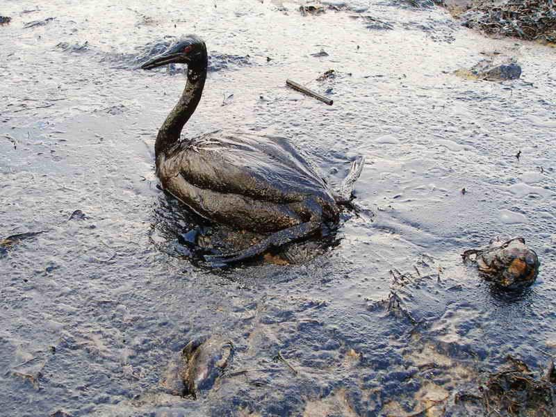 Graves daños ambientales por derrame de crudo causado por las FARC