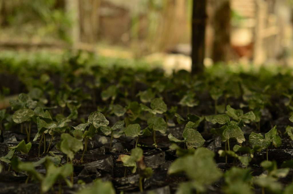 ¿Cuál es la diferencia entre la producción orgánica y la agroecológica?