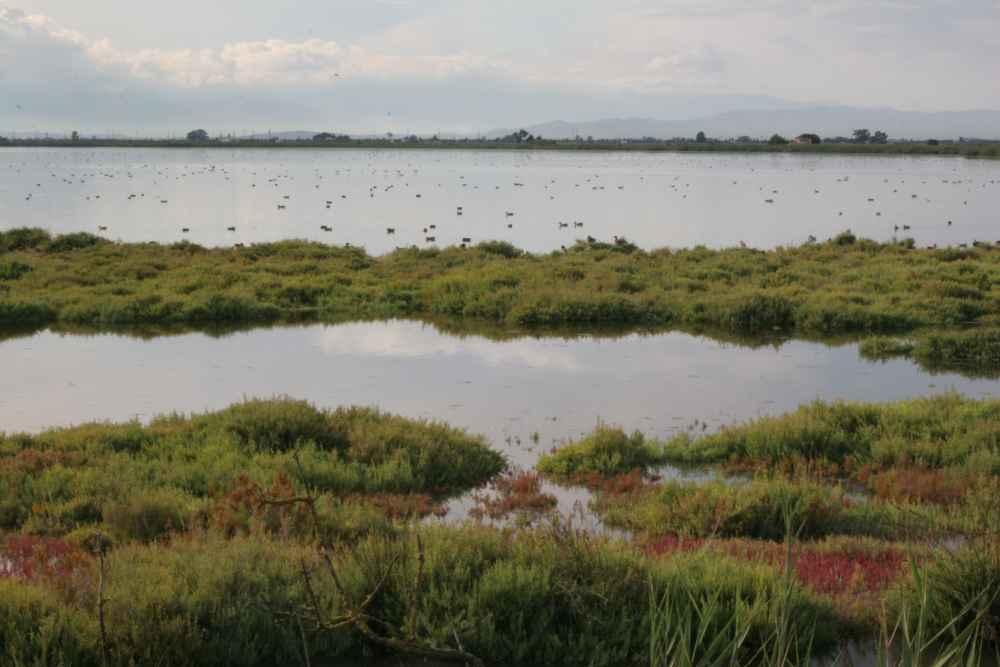 Más del 64 por ciento de los humedales en el mundo han desaparecido