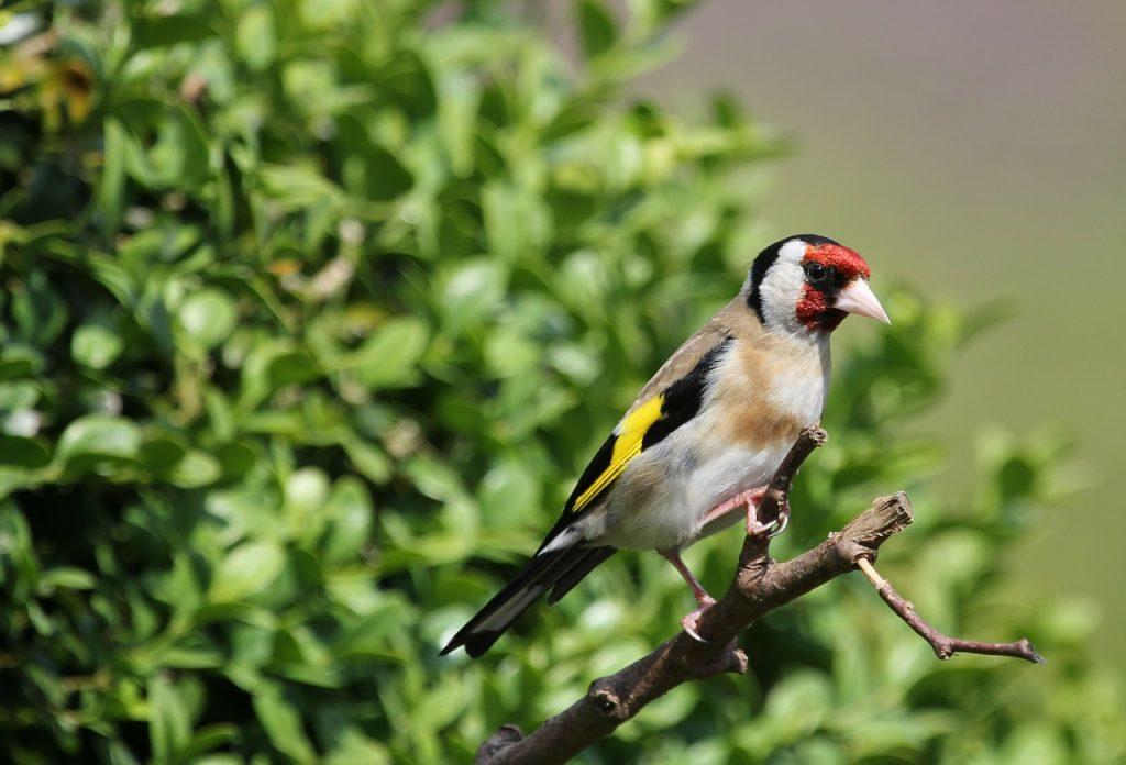 Casanare contará con cinco Áreas de Importancia para la Conservación de Aves