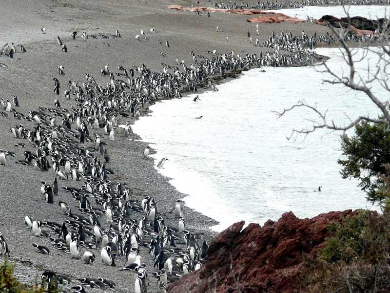 20 reservas ingresan en la Red Mundial de Reservas de Biosfera de la UNESCO
