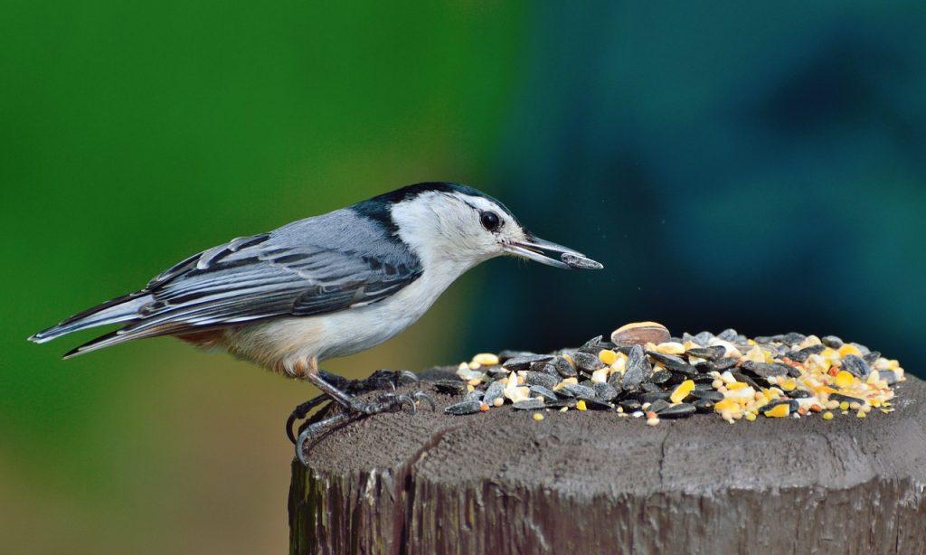 La biodiversidad cotidiana en fotografías