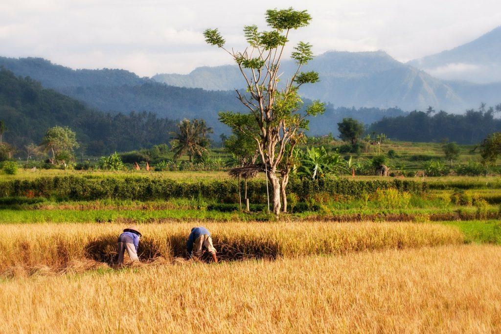 Nueva guía que busca prevenir el trabajo infantil en la agricultura