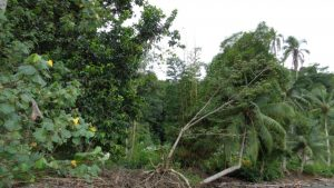 La reserva de la biosfera del Parque Nacional Natural los Katíos aún no se recupera
