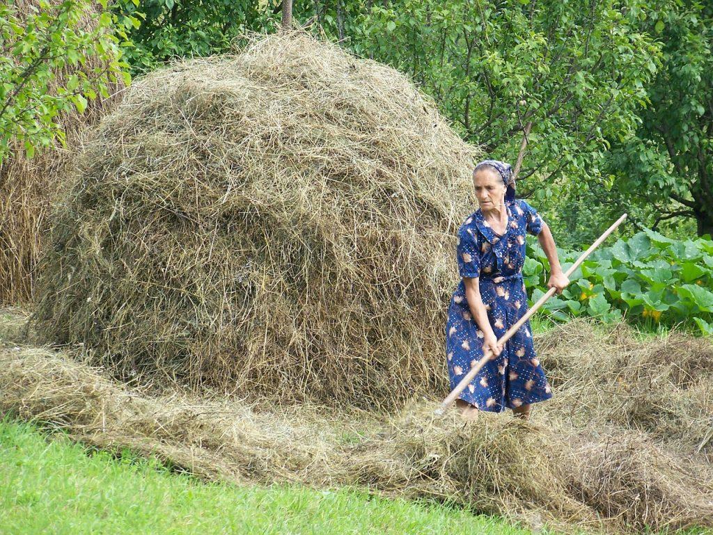 Basados en esta afirmación El Programa de Investigación sobre el Cambio Climático, Agricultura y Seguridad Alimentaria (CCAFS) junto con el Centro Internacional de Agricultura Tropical CIAT, desarrollaron directrices para incluir a la mujer en las políticas de cambio climático.