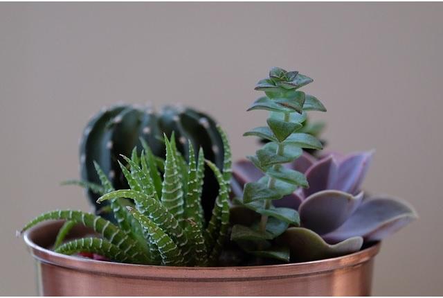Top cinco de plantas que puede tener en su apartamento