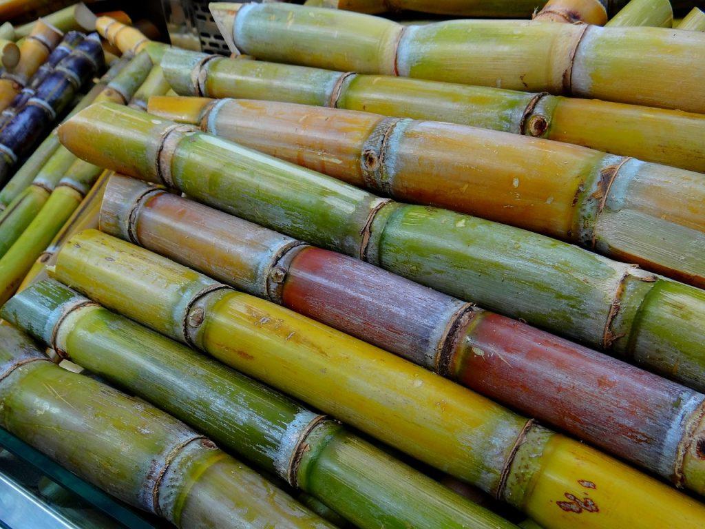 Siembra de Caña de azúcar con novedosa herramienta en el Valle del Cauca