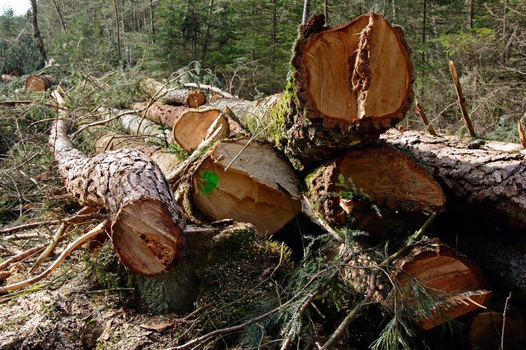 Tala de árboles se sancionara en Cali