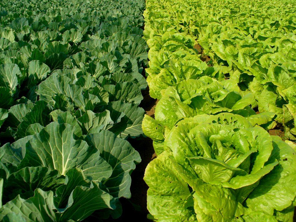 Finca orgánica Los Andes, un ejemplo de agricultura orgánica en Antioquia
