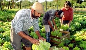 La agricultura familiar en Colombia en cuidados intensivos