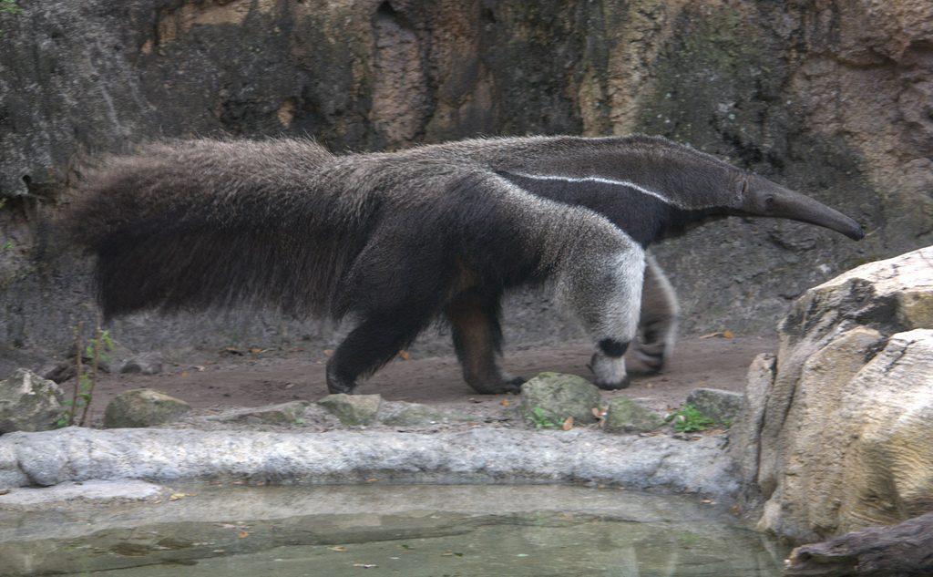 Parque Nacional Los Katíos,retirado de la Lista del Patrimonio Mundial en Peligro