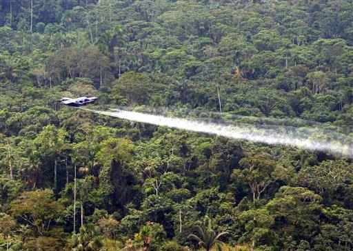 Organizaciones proponen legalizar el cultivo de coca