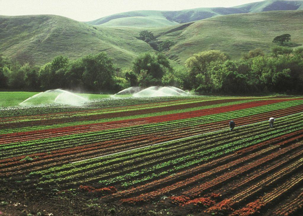 IICA invita a fortalecer la inversión en la agricultura en la región