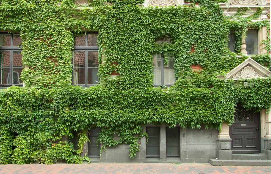 Por qué debería tener un jardín vertical en su casa