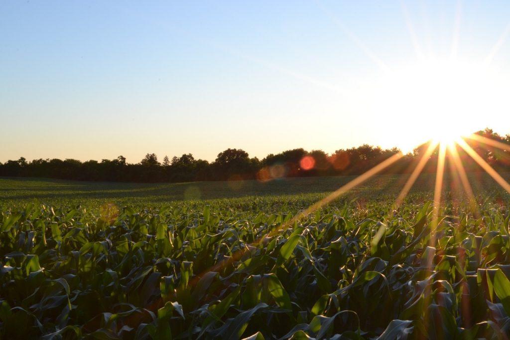 La importancia de los cultivos orgánicos en el cuidado de la naturaleza y la salud del ser humano