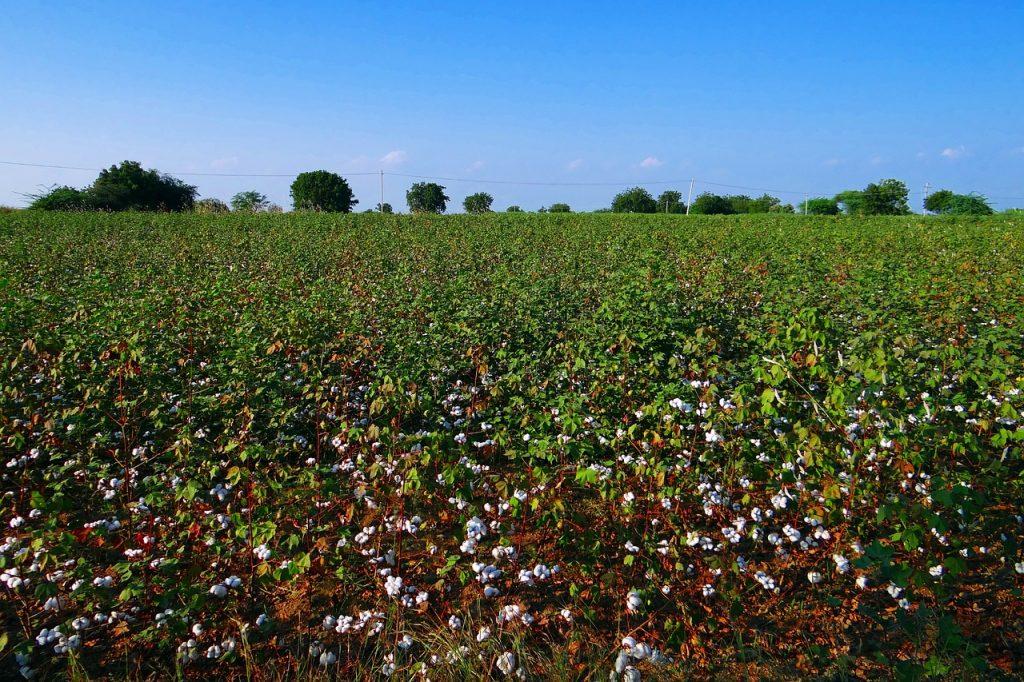 ¿Cuál es la diferencia entre los productos convencionales a los productos orgánicos?