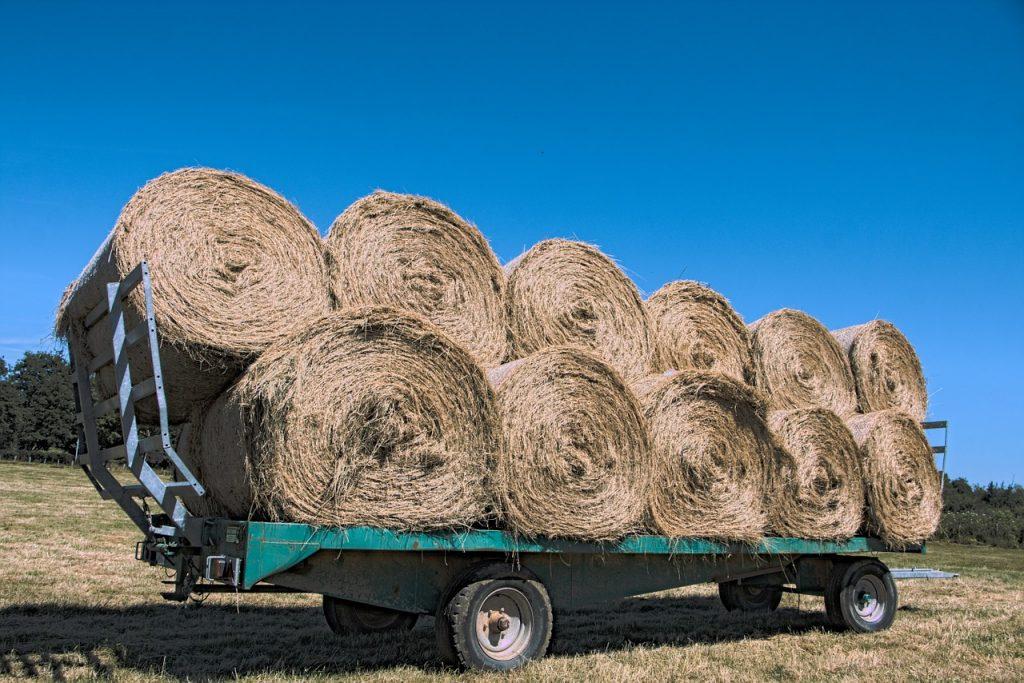 Más de 900 mil kilos de cascarillas de arroz se utilizarán para camas en Agroexpo