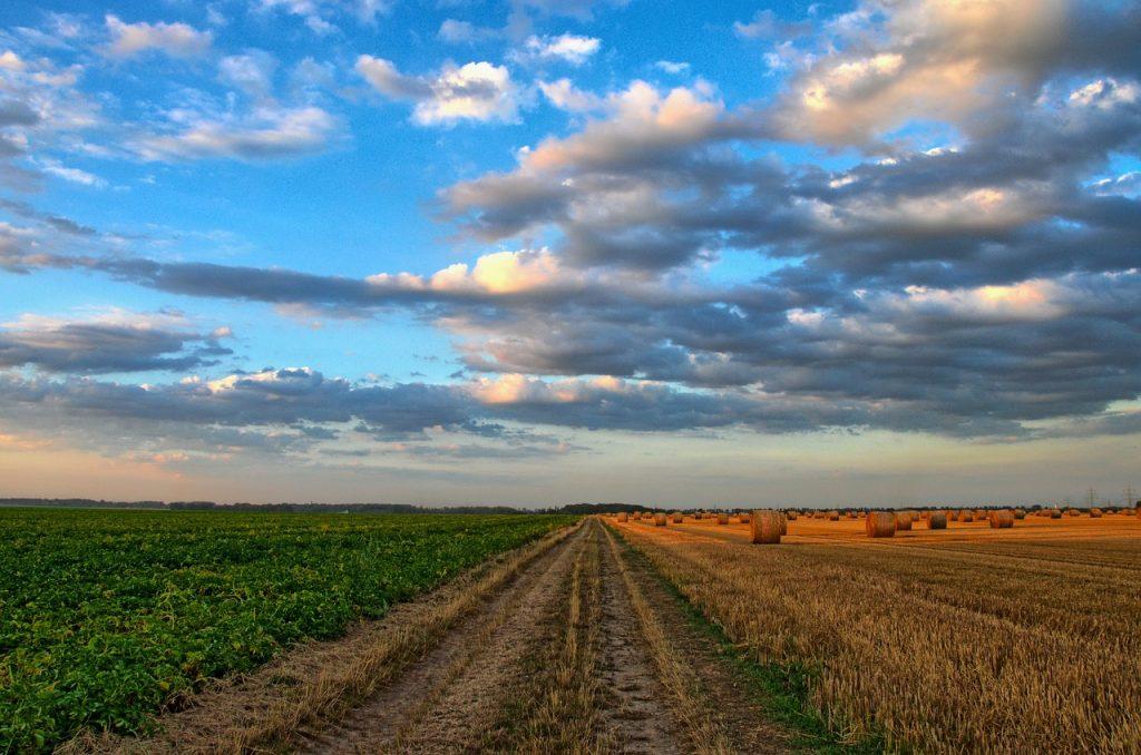 Minagricultura sufrirá una reducción de más del 34% del presupuesto